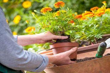 Уход за Вашим газоном и садом