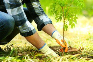 Посадка и Уход за растениями
